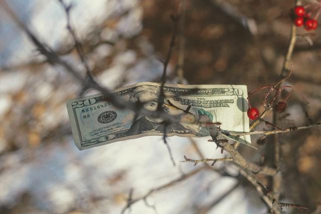 Banknot na drzewie